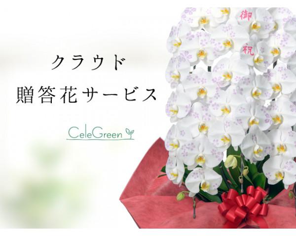 お祝い用胡蝶蘭・観葉植物 注文サービス「セレグリ」